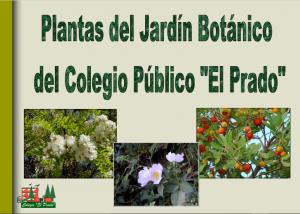 PLANTAS JARDÍN BOTÁNICO